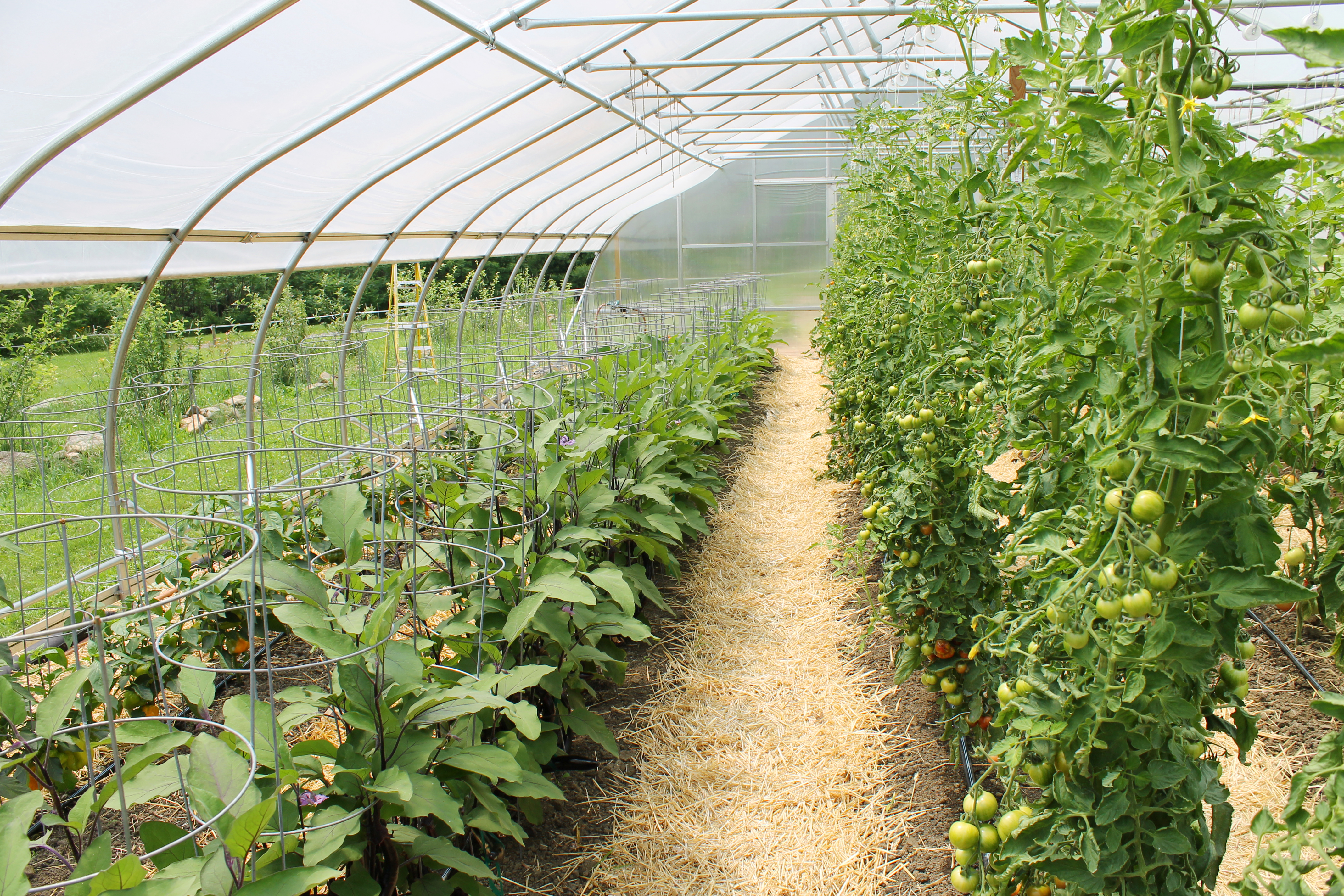 essays on sustainable agriculture